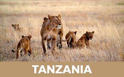 Tanzania Hover 1